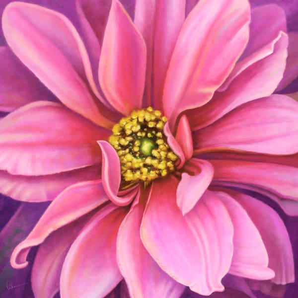 Pink Fascination Dahlia metal wall art. Aluminum Prints by the artist, Mary Ahern.