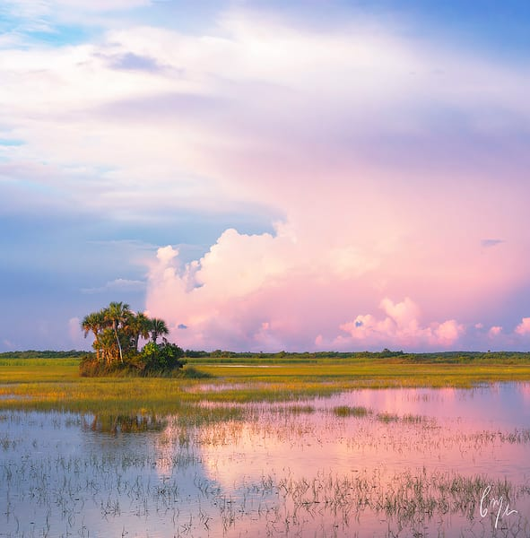 Constance Mier Photography - scenes from the Everglades