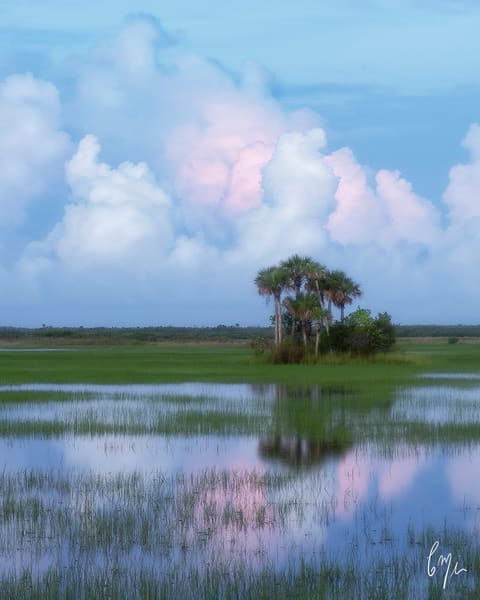 Constance Mier Photography of Florida's wild marshes