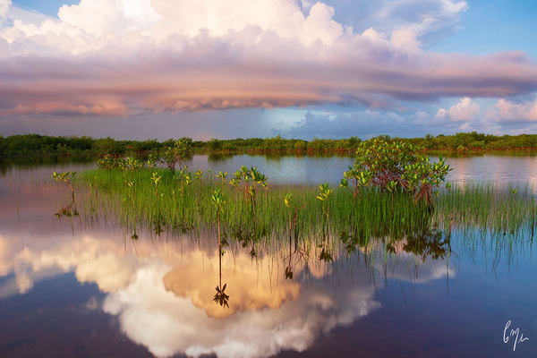 Constance Mier fine art florida nature photography