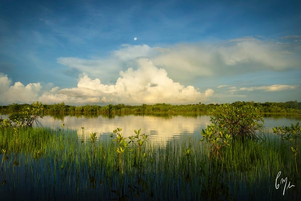Constance Mier fine art florida photography