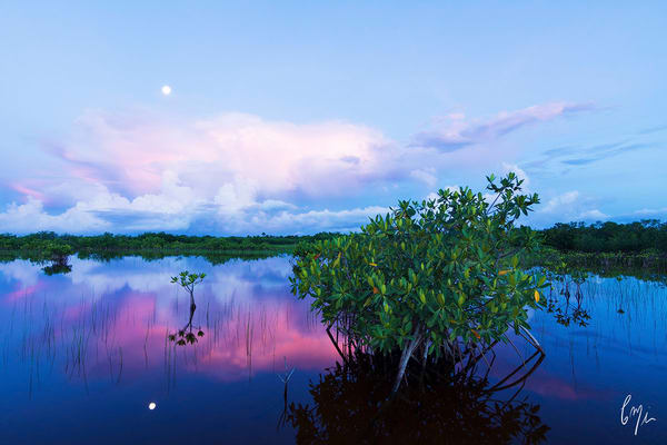 Constance Mier fine art nature photography in the everglades