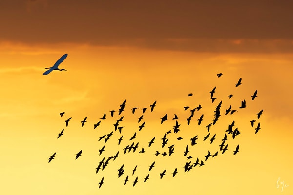 Constance Mier Photography - Birds in Flight