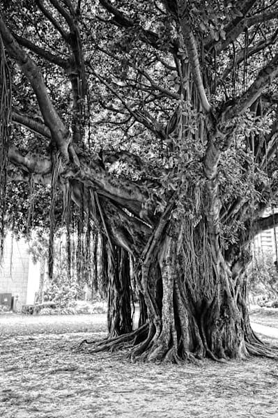 Banyan Tree I