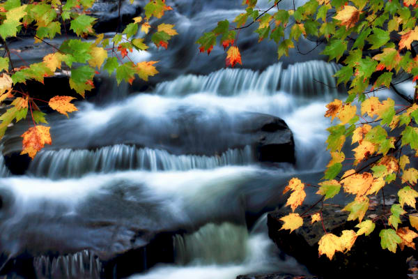 Acadia Fall Foliage Nature Photography Prints | Robbie George
