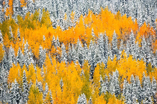 Colorado Fall Foliage | Robbie George Photography