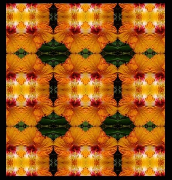 Orange Hibiscus Echo | Marci Brockmann Author, Artist, Podcaster & Educator