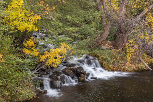 Last Remaining Fall Colors Along Oak Creek