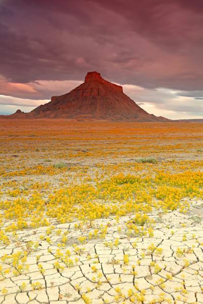 Wildflowers at Factory Butte