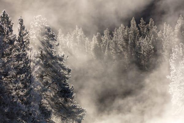Winter Landscape Forest Wall Art | Robbie George