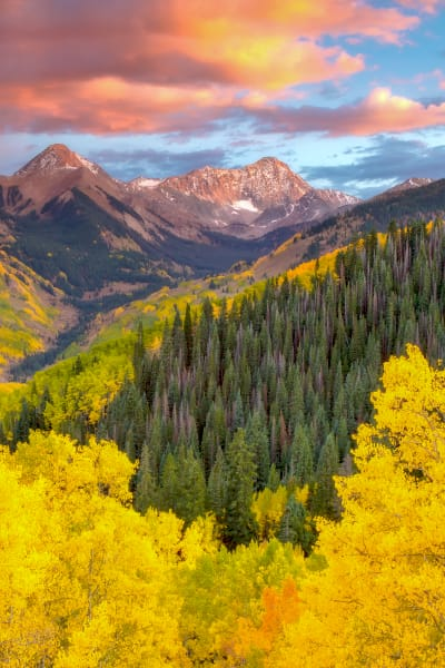 Colorado Fall Colors Forest Wall Art | Robbie George