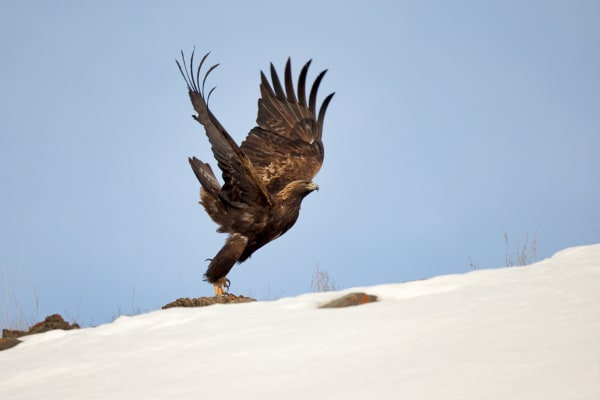 Birds Of Prey | Robbie George Photography