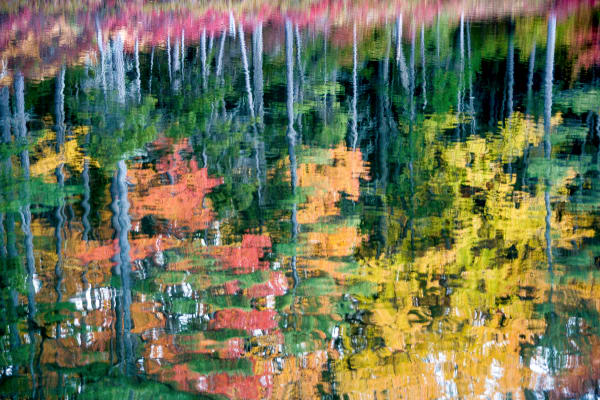 Fall Scenery Forest Wall Art | Robbie George