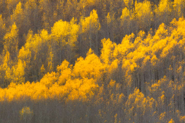 Colorado Fall Leaves Forest Wall Art | Robbie George