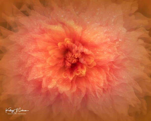 Dahlia  6424 Photography Art | Images2Impact