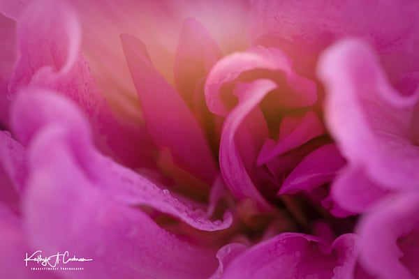 Dahlia  6458 Photography Art by Images2Impact