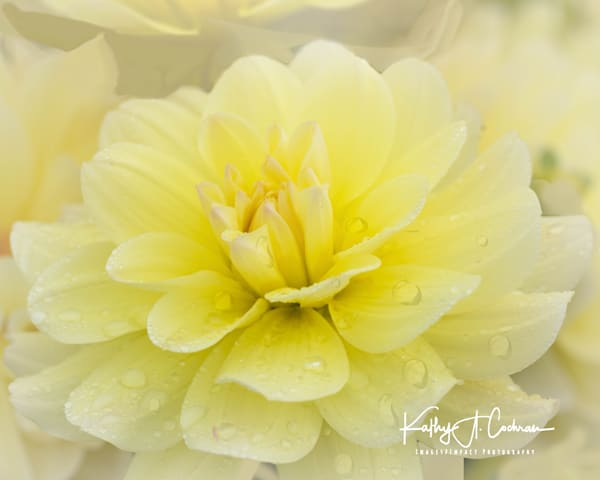 Dahlia  6541 Photography Art by Images2Impact