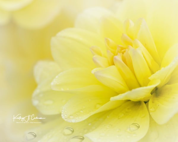 Dahlia  6549 Photography Art by Images2Impact