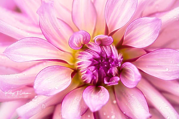 Floral Art Photography