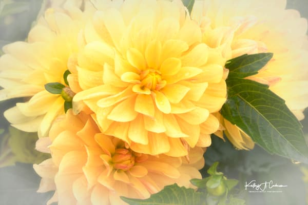 Dahlia  6652 Photography Art by Images2Impact