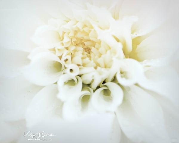 Dahlia  6686 Photography Art | Images2Impact