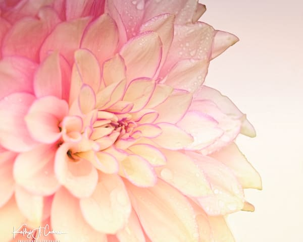 Dahlia  6722 Photography Art by Images2Impact