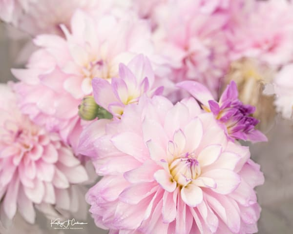 Dahlia  6730 Photography Art by Images2Impact
