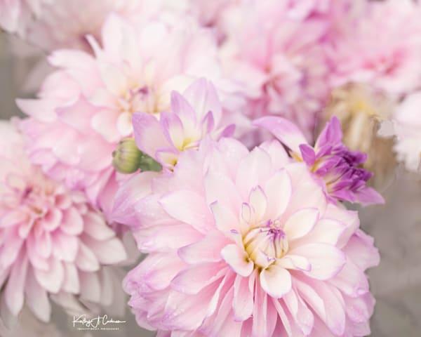 Dahlia  6730 Photography Art | Images2Impact