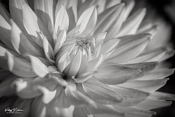 Dahlia   3 Photography Art | Images2Impact