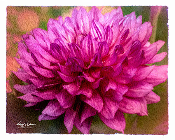 Dahlia   14 Photography Art | Images2Impact