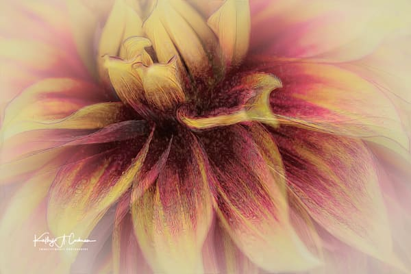 Dahlia   23 Photography Art | Images2Impact