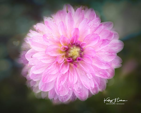 Dahlia   25 Photography Art | Images2Impact