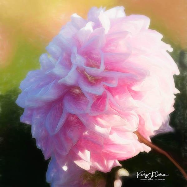 Dahlia  4989 Photography Art | Images2Impact