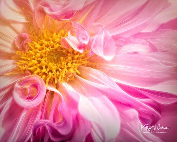 Dahlia  5824 Photography Art | Images2Impact