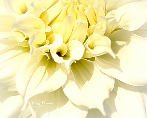 Dahlia  5847 Photography Art | Images2Impact