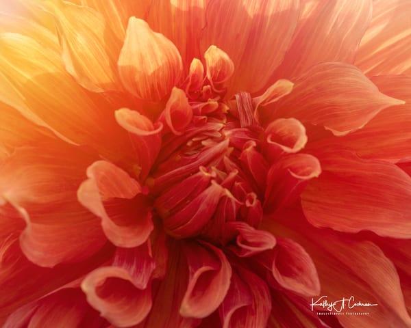 Dahlia  5842 Photography Art | Images2Impact