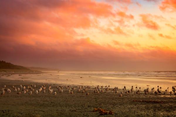 haida gwaii sunset
