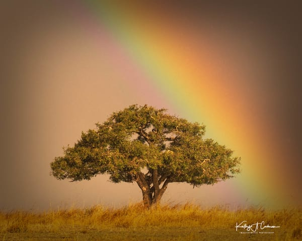 Africa Landscape  2713 Photography Art | Images2Impact