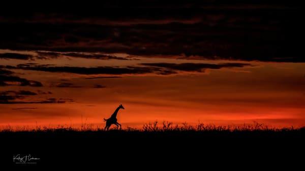 Africa Landscape  6026 Photography Art | Images2Impact