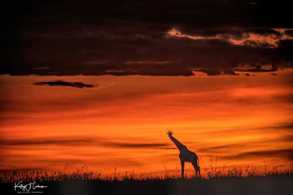 Africa Landscape  6052 Photography Art | Images2Impact