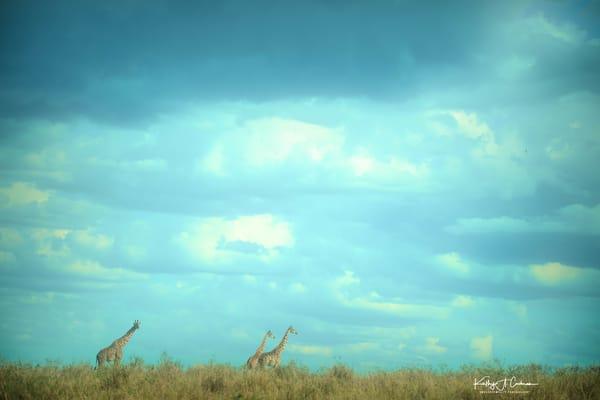 Africa Landscape  6972 Photography Art | Images2Impact