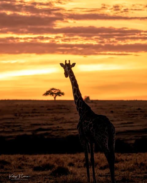 Africa Landscape  6064 Photography Art | Images2Impact