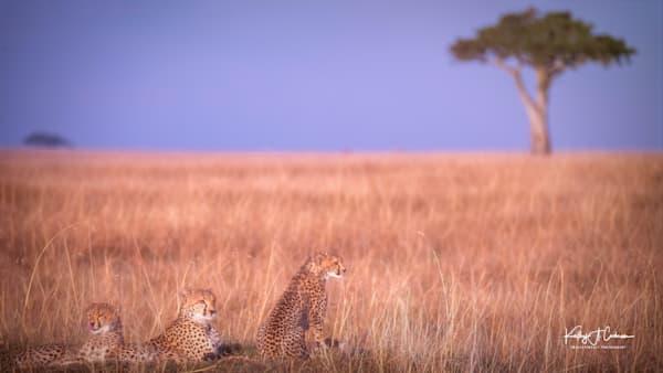 Africa Landscape  9427 Photography Art | Images2Impact