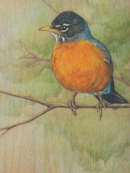 robin drawing art spring nature