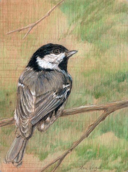 Black capped chickadee songbird grey bird