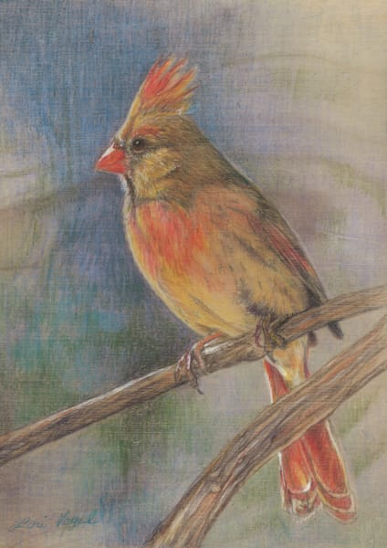 Female Cardinal Art | Lori Vogel Studio