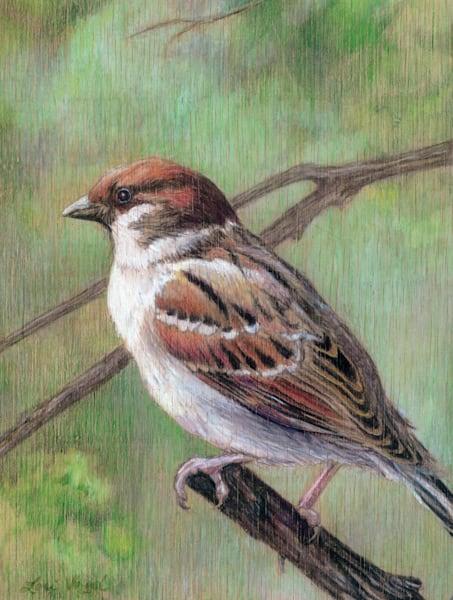 Sparrow Art | Lori Vogel Studio