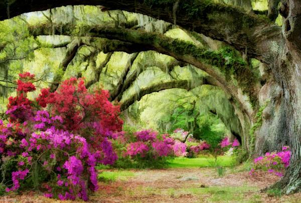 Magnolia Oak Tunnel Painting