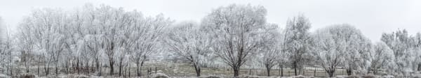 Winter Frost 1 - A Panoramic Photograph of Trees with frost available at a Fine Art Print
