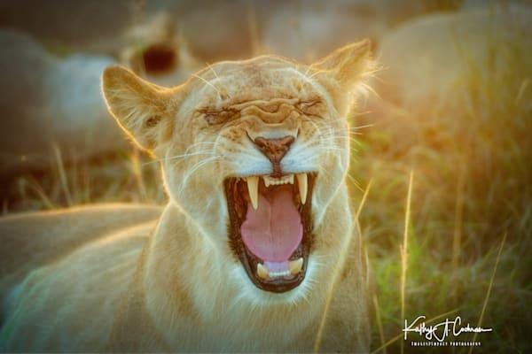 Kenya Lions   2 Photography Art | Images2Impact